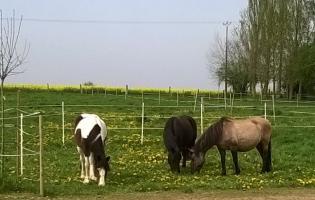 chevaux chez ânima